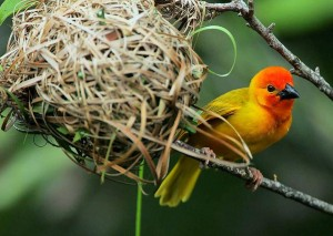Kenya - Des oiseaux