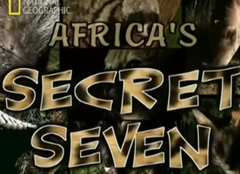 The seven secrets of African animals: serval, porcupine, African wild cat, anteater, civet, pangolin, genet.