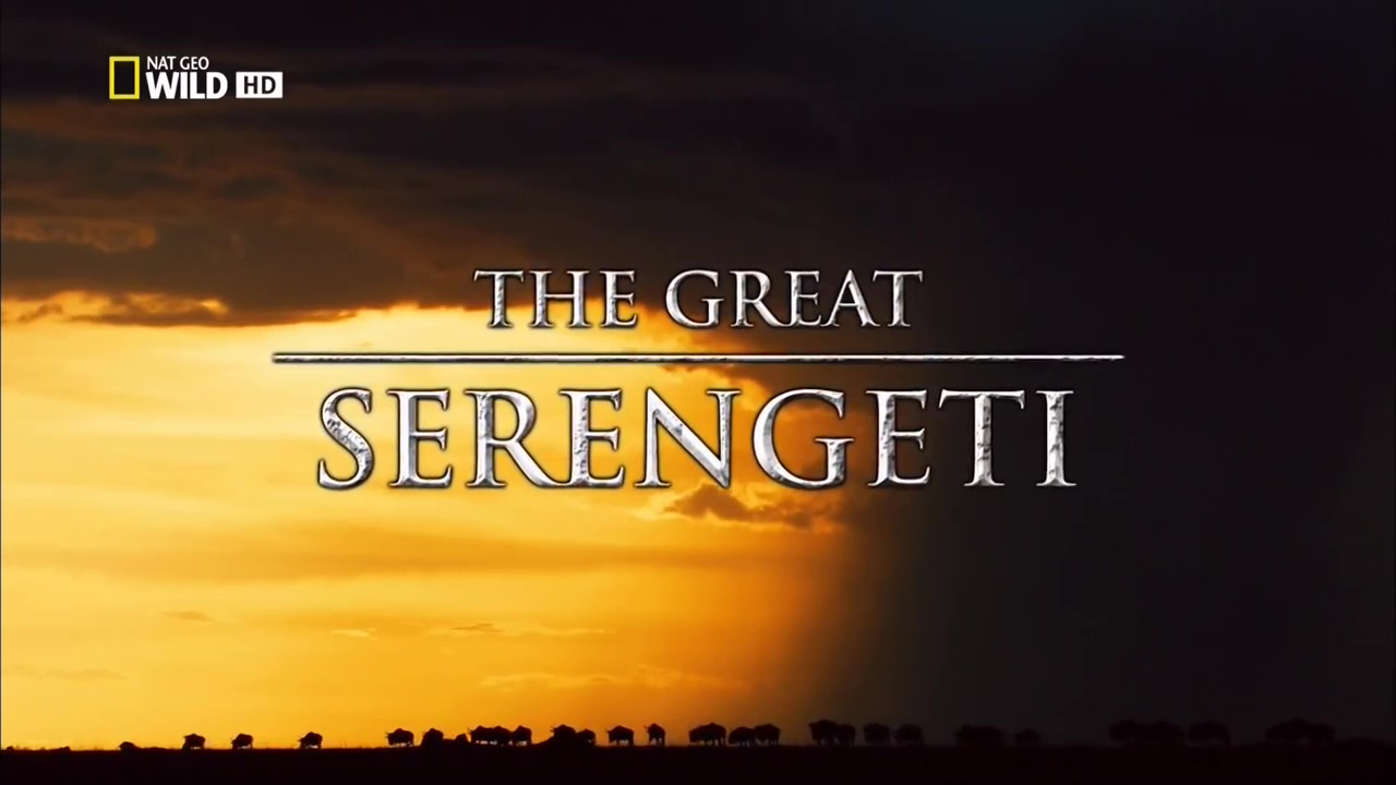 The great Serengeti
