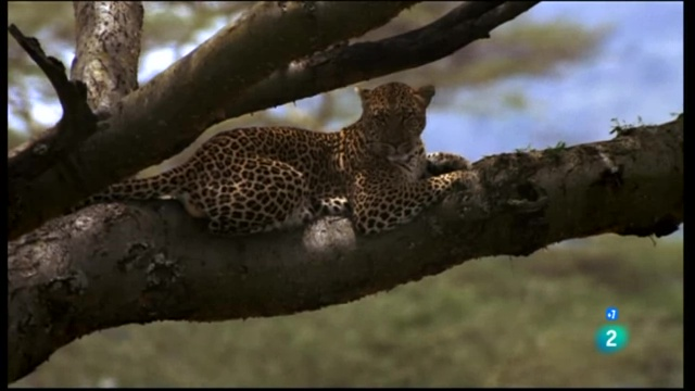 Life in Paradise wild, the Serengeti